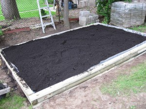 garden bed - marigolds - Change Your Health Right In Your Back Yard