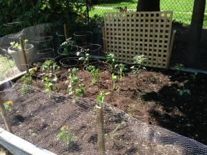 veggie garden - Change Your Health Right In Your Back Yard